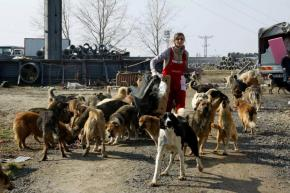 A Genocide Revealed : Turkish Shelter Kills 200 dogs